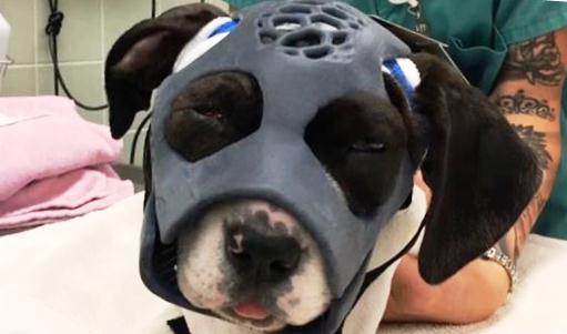 3Д технологии в ветеринарии
