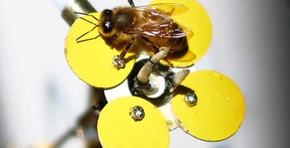 3D печать спасает пчел