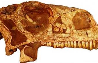 3д печать черепа динозавра