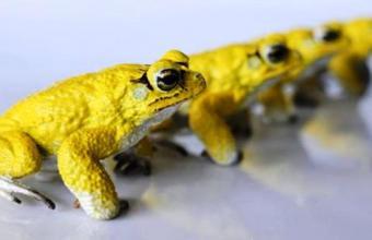 Реалистичная робо-жаба